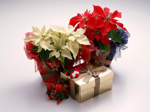 Живые цветы в калуге делаем подарок своими руками мужчине
