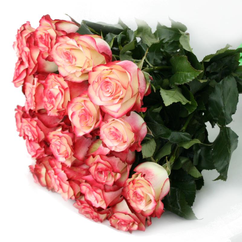 Букет из двухцветных роз, цветы подарок фото